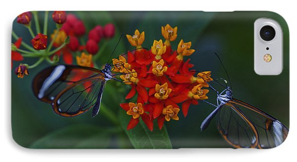 The Glasswinged Butterfly IPhone Case by Maj Seda