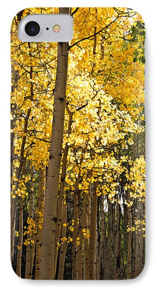IPhone Case featuring the photograph The Golden Tree by Eric Rundle