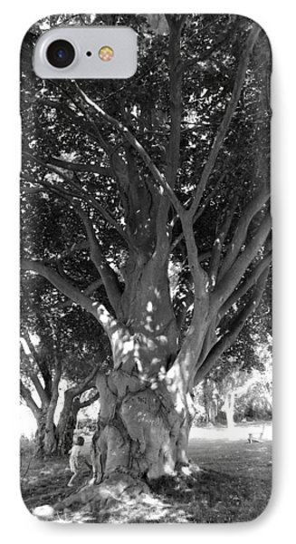 The Grandmother Tree IPhone Case