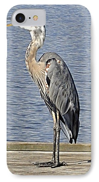 The Great Blue Heron Photo IPhone Case by Verana Stark