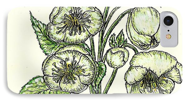 IPhone Case featuring the drawing The Helleborous by VLee Watson