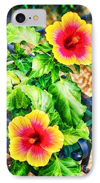 The Hibiscus Of Torcello IPhone Case by Jack Torcello