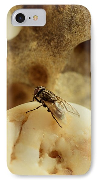 The Housefly V IPhone Case by Marco Oliveira