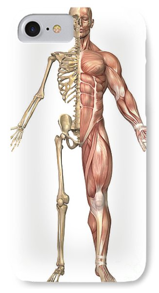 The Human Skeleton And Muscular System IPhone Case by Stocktrek Images