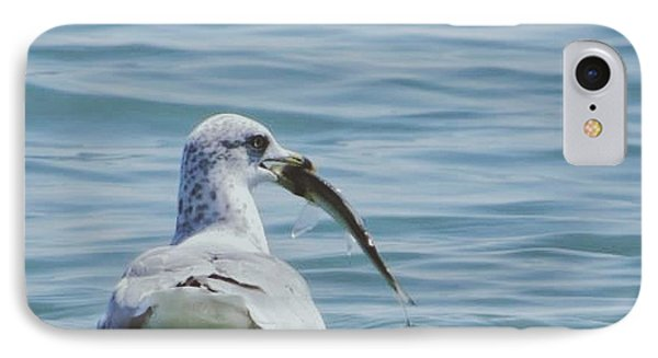 The Hungry Seagull IPhone Case by Nikki McInnes