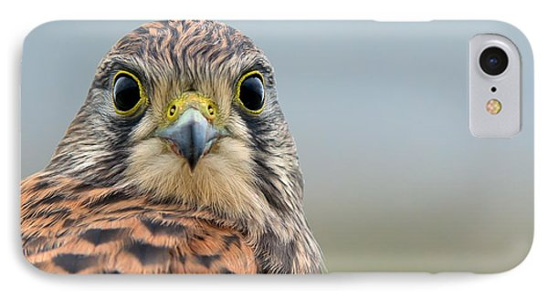 The Kestrel Face To Face IPhone Case by Torbjorn Swenelius
