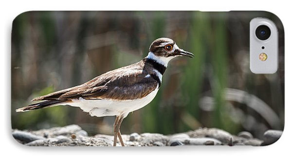 The Killdeer IPhone Case by Robert Bales