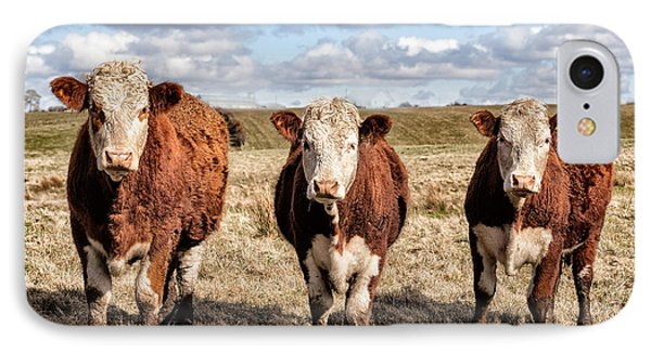 The Ladies Three Colourful Cows IPhone Case