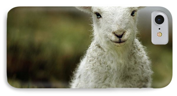 The Lamb IPhone Case by Angel  Tarantella