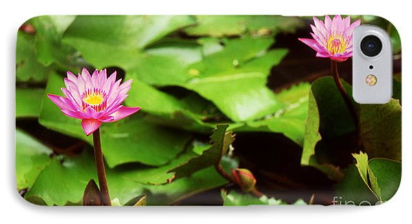The Lily Pond IPhone Case by Paul Cowan