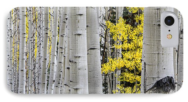 The Littlest One IPhone Case by The Forests Edge Photography - Diane Sandoval