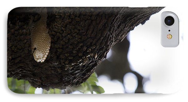 The Live Oak Phone Case by Shawn Marlow