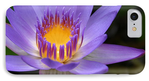 The Lotus Flower - Tropical Flowers Of Hawaii - Nymphaea Stellata Phone Case by Sharon Mau
