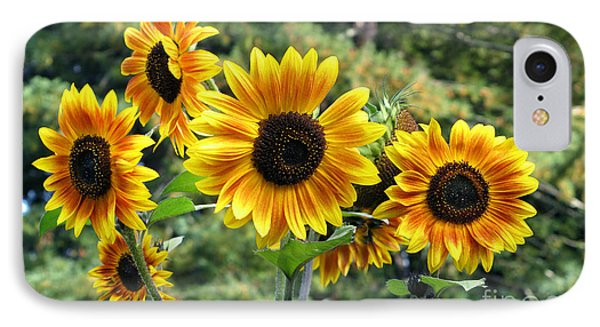 The Magic Of Sunflower Power IPhone Case by Wernher Krutein