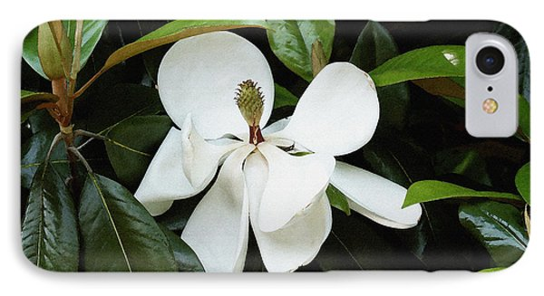 IPhone Case featuring the photograph The Magnolia Bloom  by James C Thomas