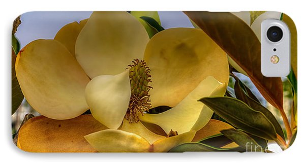IPhone Case featuring the photograph The Magnolia by Maddalena McDonald