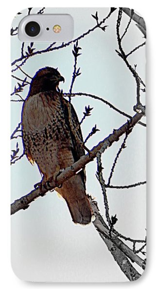 The Majestic Hawk IPhone Case by Bobbee Rickard