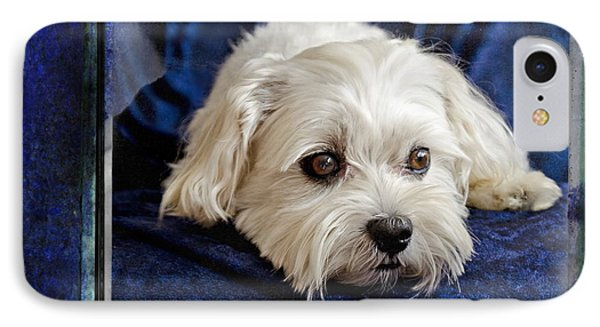 The Maltipoo Bailey On A Blue Background Phone Case by Harold Bonacquist
