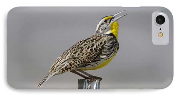 Meadowlark iPhone 7 Case - The Meadowlark Sings  by Jeff Swan