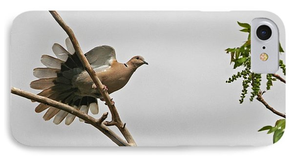 The New Dove In Town IPhone Case by Tom Janca