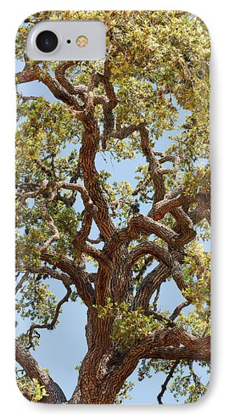 The Old Tree IPhone Case by Connie Fox