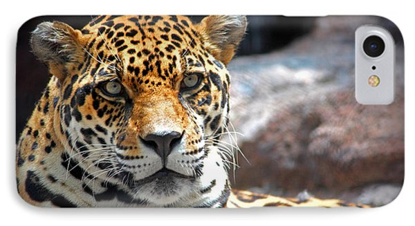 The Ole Leopard Don't Change His Spots IPhone Case by Lynn Sprowl