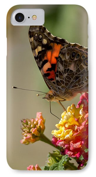 The Painted Lady IPhone Case by Ernie Echols
