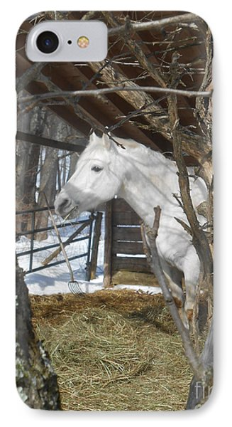 The Paso Fino Stallion At Home IPhone Case