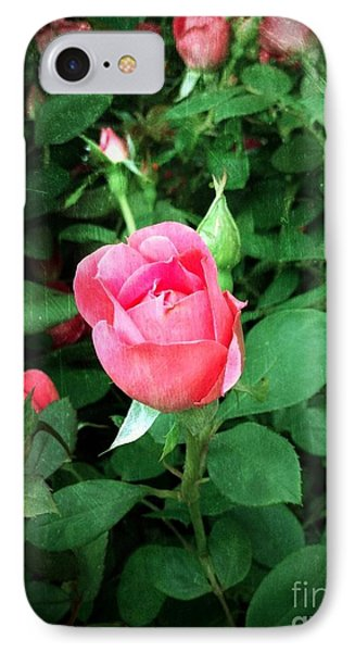 IPhone Case featuring the photograph The Perfect Pink Rose by Becky Lupe