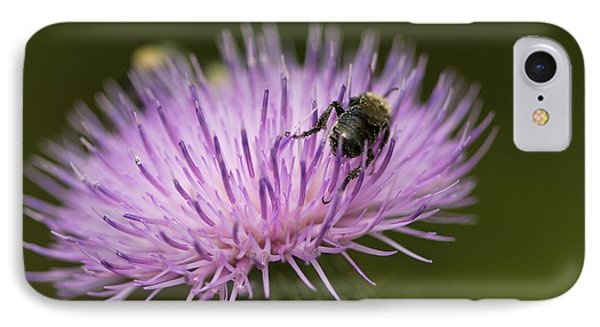 The Pollinator - Bee On Thistle  IPhone Case by Jane Eleanor Nicholas