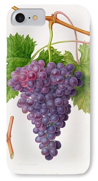 The Poonah Grape IPhone Case by William Hooker