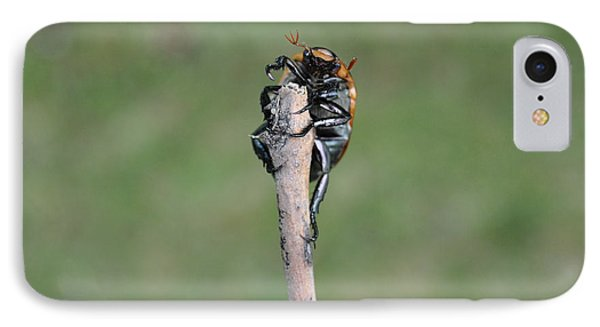 IPhone Case featuring the photograph The Posing Beetle by Verana Stark