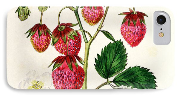 The Roseberry Strawberry IPhone Case by Edwin Dalton Smith
