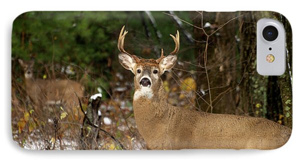 The Rutting Whitetail Buck IPhone Case