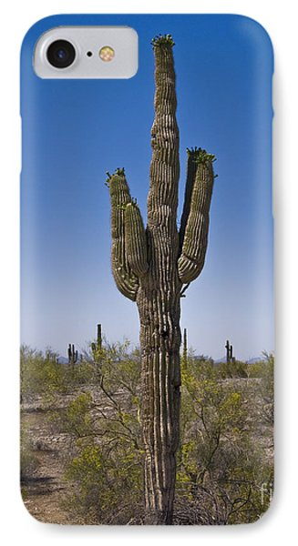 The Saguaro Cactus Ready To Bloom Phone Case by Kirt Tisdale