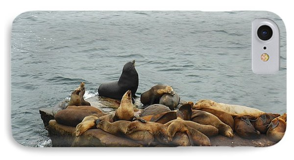The Sea Lion And His Harem Phone Case by Mary Machare