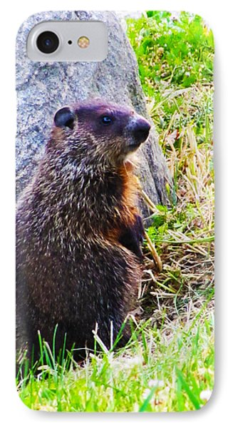 The Groundhog Sentinel IPhone Case by Ron  Tackett