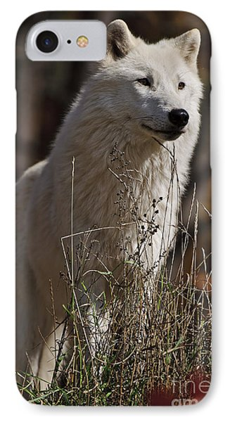 IPhone Case featuring the photograph The Sentinel by Wolves Only