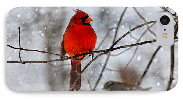 Blue Eyes In The Snow Cardinal  IPhone Case