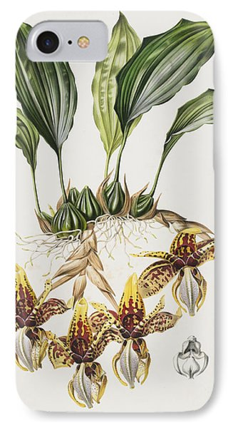 The Stanhope Tiger Orchid IPhone Case by Maxim Gauci