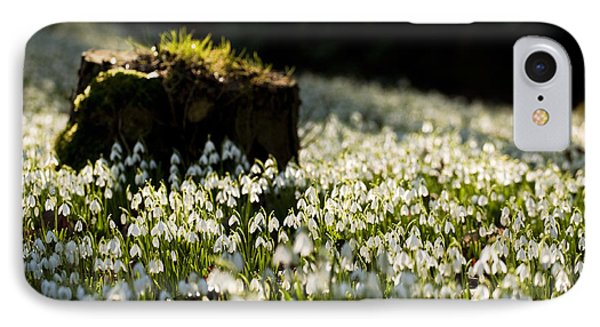 The Stump And The Snowdrops Phone Case by Anne Gilbert