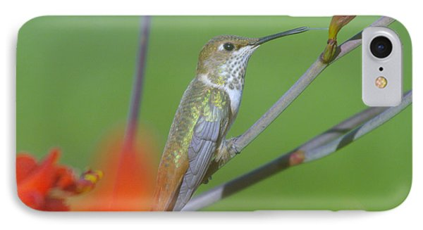 The Tongue Of A Humming Bird  Phone Case by Jeff Swan