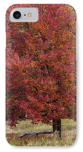 IPhone Case featuring the photograph The Tree by Timothy McIntyre