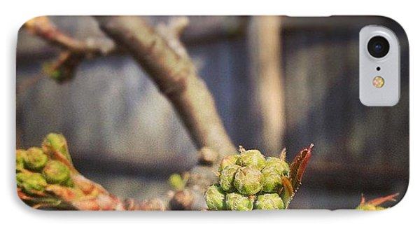 The Trees Are Budding IPhone Case
