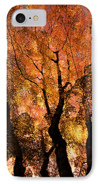 The Trees Dance As The Sun Smiles IPhone Case by Don Schwartz