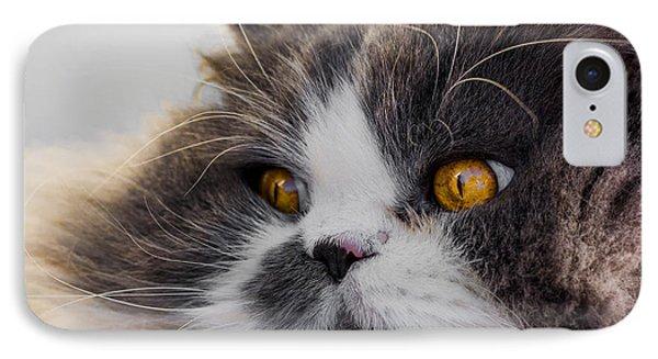 The Watching Cat IPhone Case by Daniel Precht