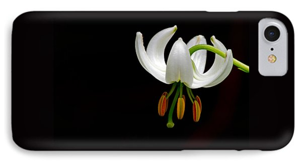 The White Form Of Lilium Martagon Named Album IPhone Case by Torbjorn Swenelius