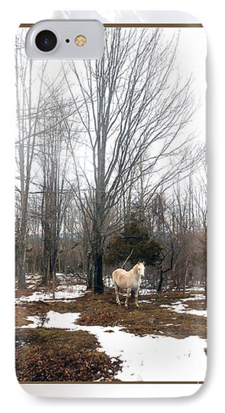 The White Stallion On A Snowless  Mound Phone Case by Patricia Keller