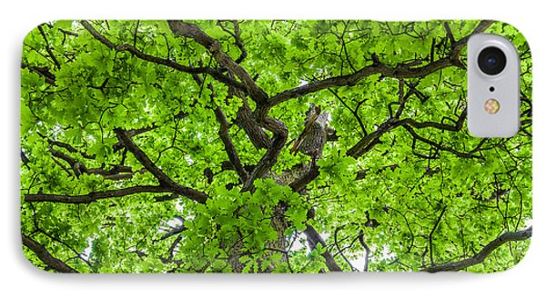 The Young Oak IPhone Case by Semmick Photo