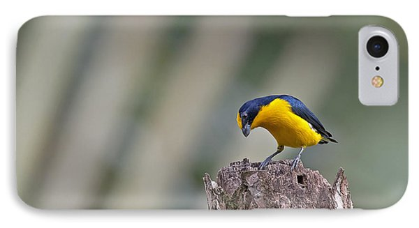 Thick-billed Euphonia IPhone Case
